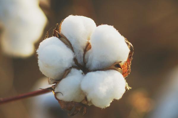 coton canclini
